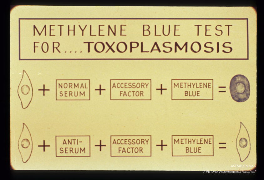 Explanation of methylene blue test.