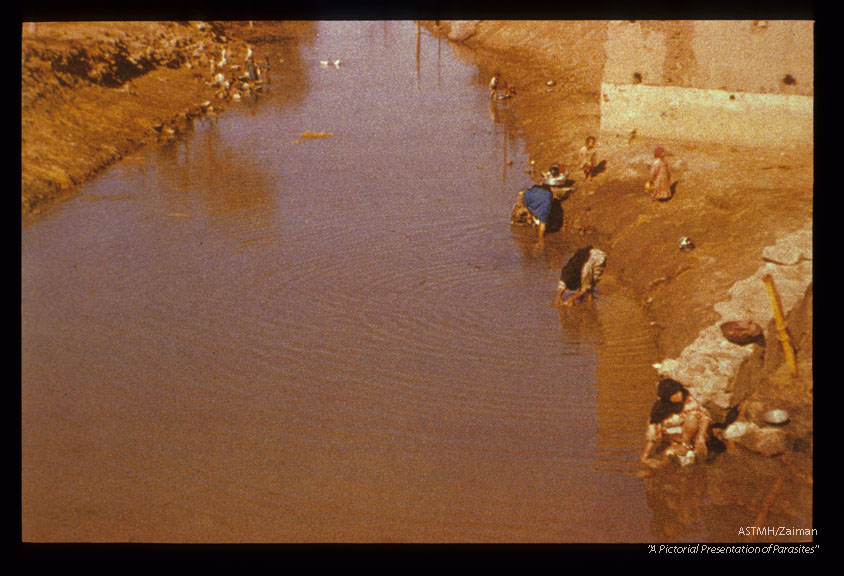 Irrigation canal in Egypt. Sixty-two percent oF children 2-6 years old are infected, intermediate host is Bulinus.
