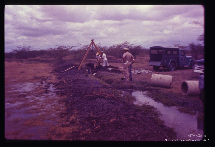 Control by construction of concrete culvert in Guanica swamp.