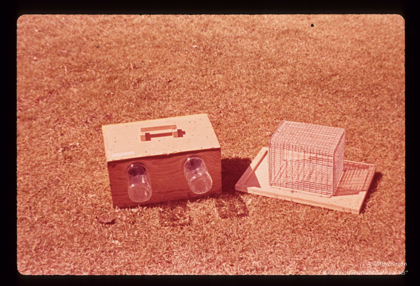 Collecting flies in traps baited with birds.