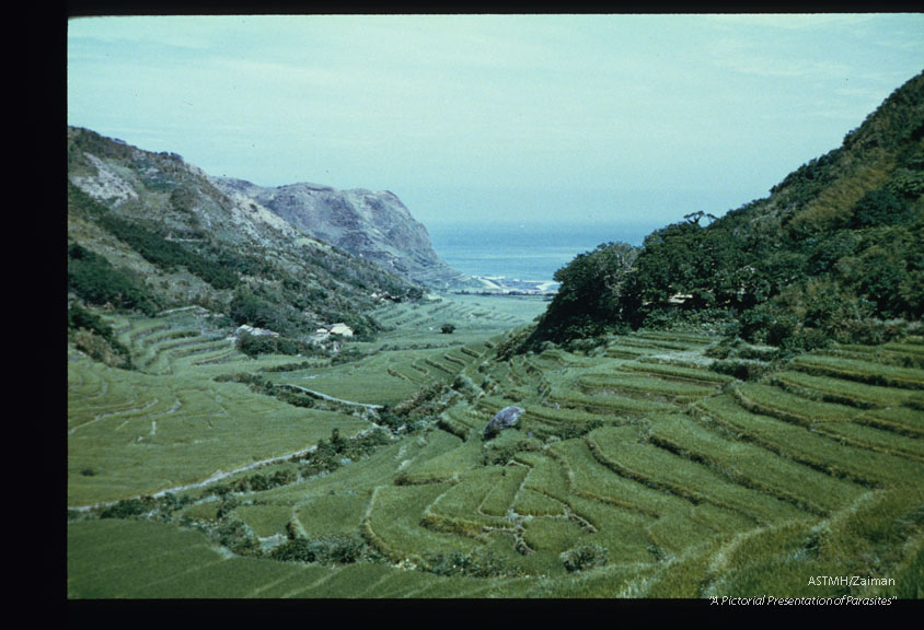Village of Ali-lao showing terraced rice paddies on one side and tea groves on the other.